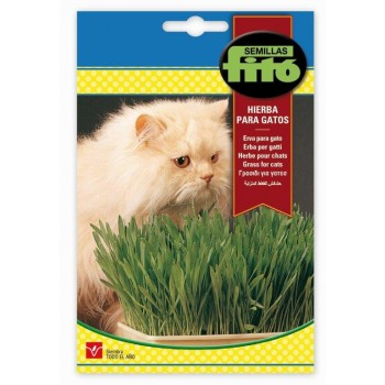 CAT GRASS SUPERBOL 20GR.