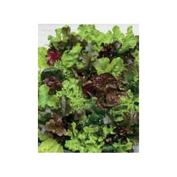 """BABY LEAF MIX """"LETTUCES TO..."""